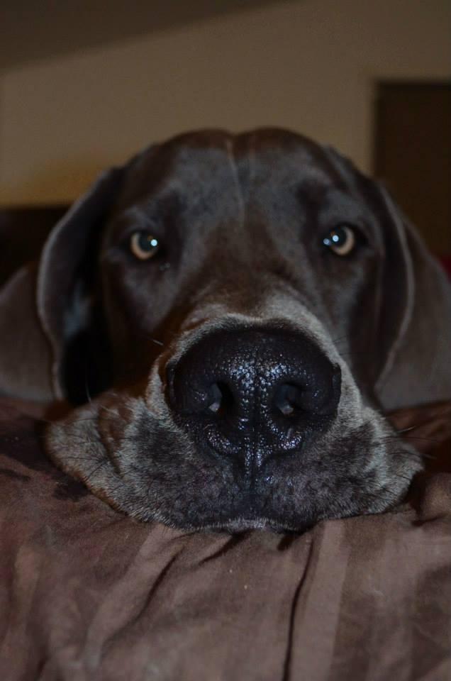 Denny Man!  He's my handsome pup!