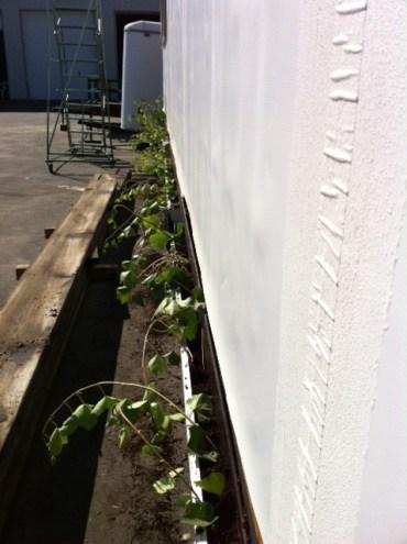 No... I'll build my planters instead...