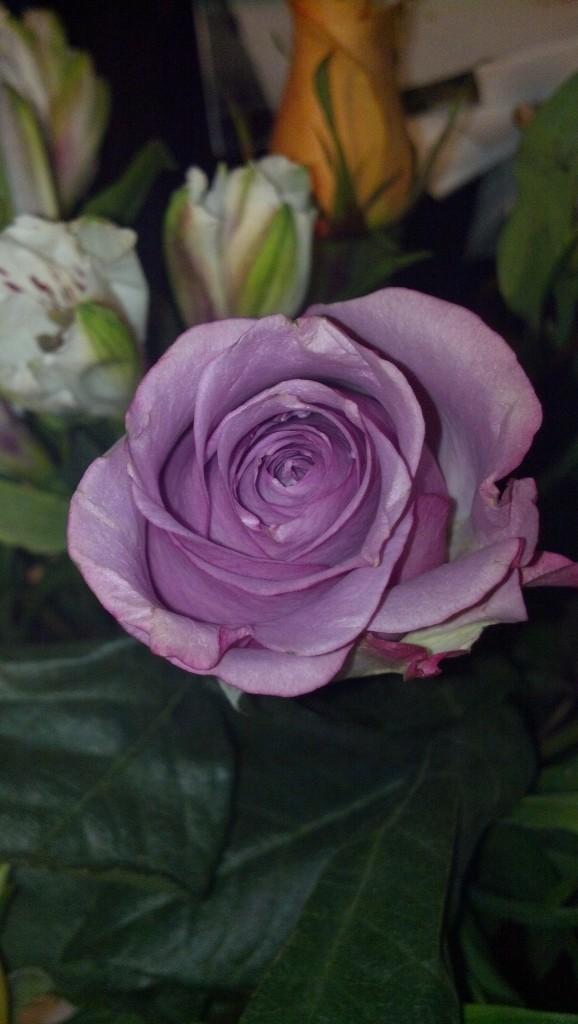 Pretty purple flower!