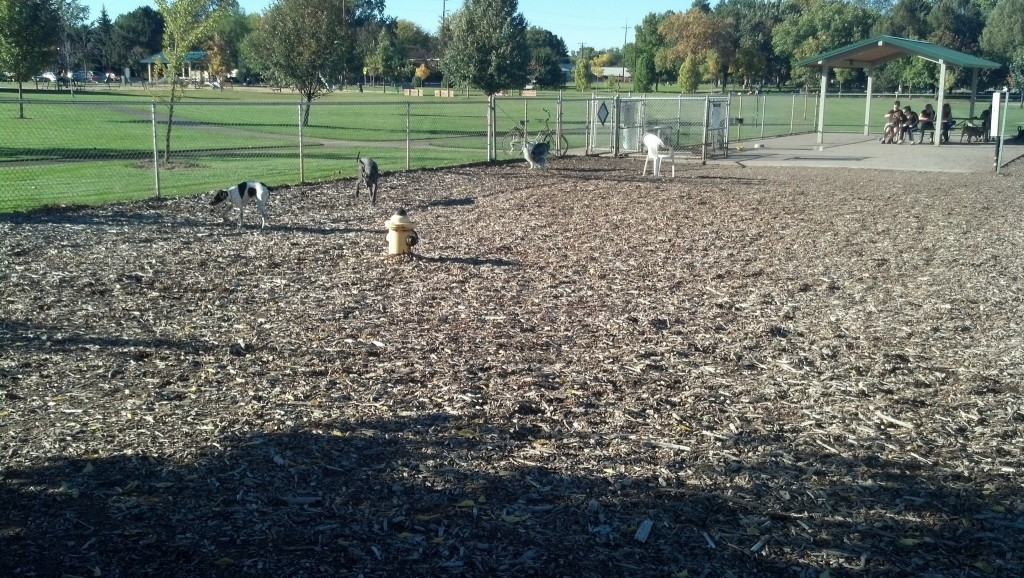 Denver got his first trip to a real dog park.  This was such a great park, super secure and TONS of dogs!