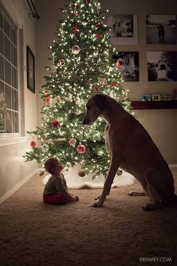 And next years Christmas card :). Stacey showed this to me, also pretty damn cute!
