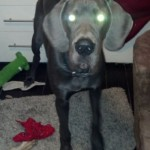 And his alien eyes