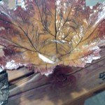 Today I went to the art co-op with Becca and we saw these leaves, I think they are SO cool, I took some pictures :) this one was about 18″-20″ across