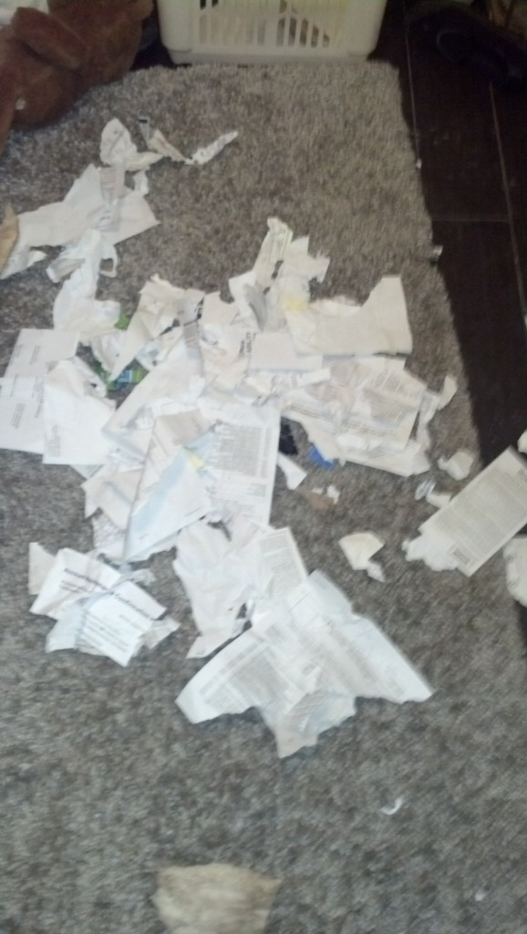 This is what my little monster did!  I FINALLY went through all of my lifes papers, pulled out and kept only the most important ones, including a divorec decree, a name change, a birth certificate and years worth of tax information... I put them in a folder on my bookshelf, with a bunch of appetizing looking books and THIS is the folder Denver decides to get into... So, this is what is left of all my lifes documents... all I can do is shake my head and laugh... 'the dog ate it!'  I'm sure I'll be cussing him for years to come as I need each of these things and have to re-collect them...