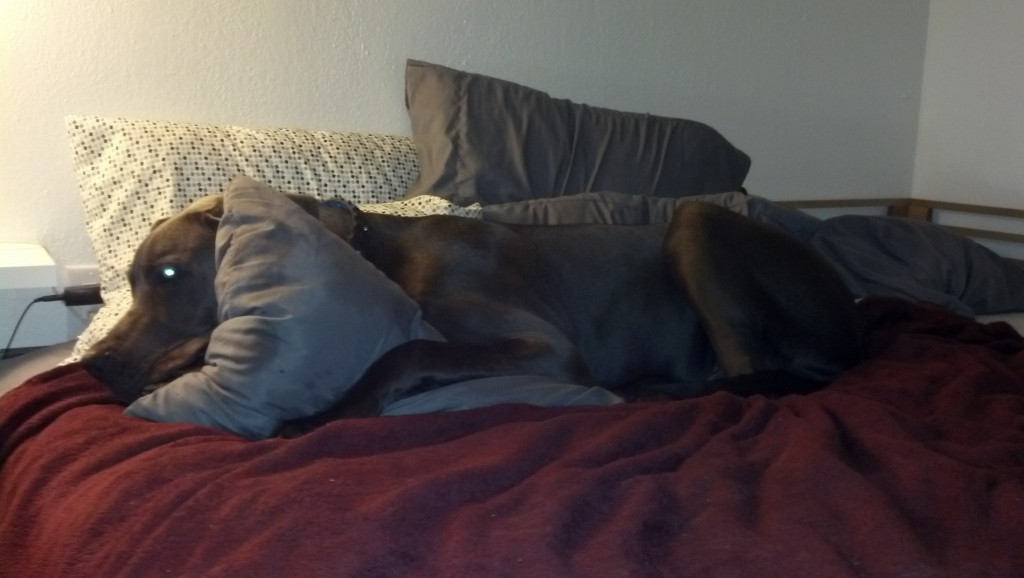 'stay off the pillows' means 'lay on the pillows' in dog I guess... :)