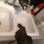 He is wanting to drink out of the kitchen sink, that is still just a little too tall for him, he'll grow into it! :)
