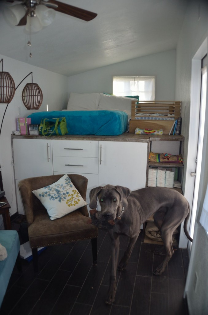 Here's the overall living area with a great dane for scale :)