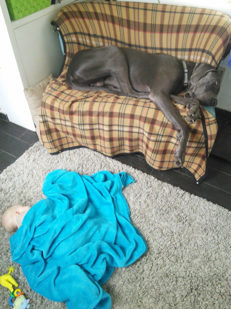 before I catch too much crap for the dog being on the couch and kid on the floor... the kid can't sleep on the couch because she'll dive-bomb off, yes she could sleep in bed or in her pack n play but she fell asleep here so I opted to just keep a close eye on things (I've got some emails about this being reversed... it's not, it's intentional and neither are abused...