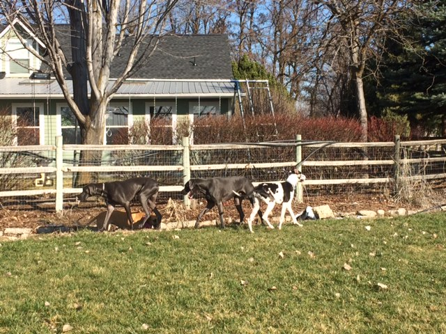 Denny playing with his buddies