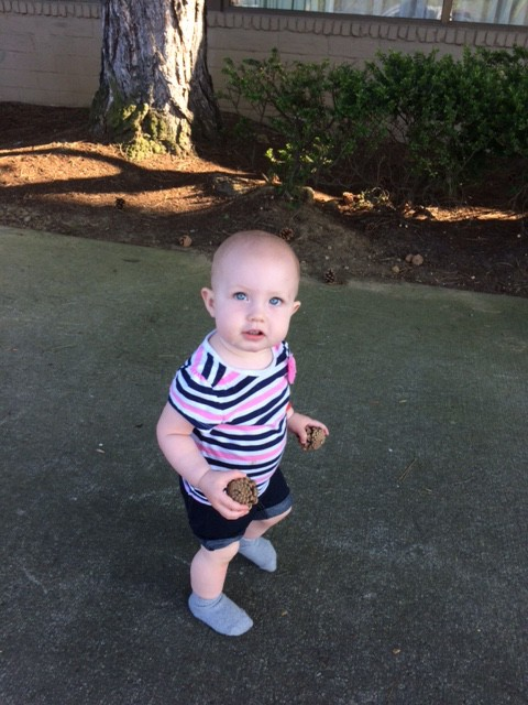 She did find many a pine cones to entertain herself with!
