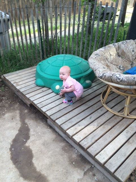 Hazel digging her new play zone, I kind of like it too... the chair might have to go though, sadly...