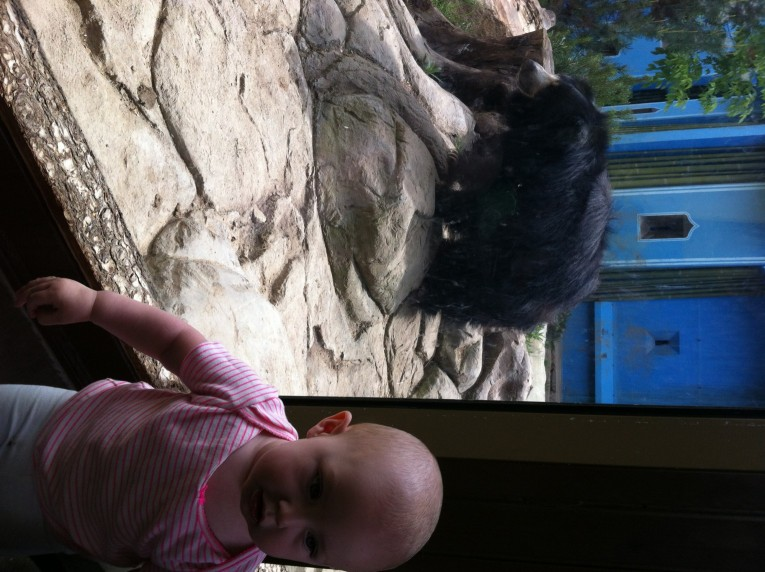 We got to go to the zoo one last time with Hazel's baby-buddy Harland, they saw a bear!