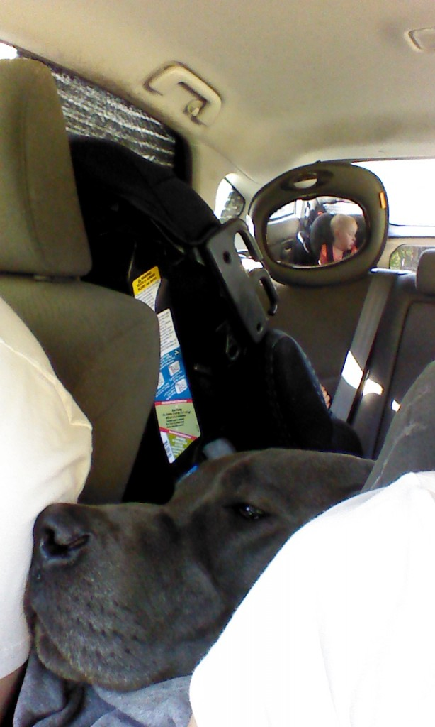 Sometimes Denver and I have to wait in the car while Hazel finishes her nap, don't wake sleeping babies!