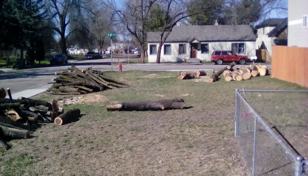 A new landscape, they eventually came to get the wood too