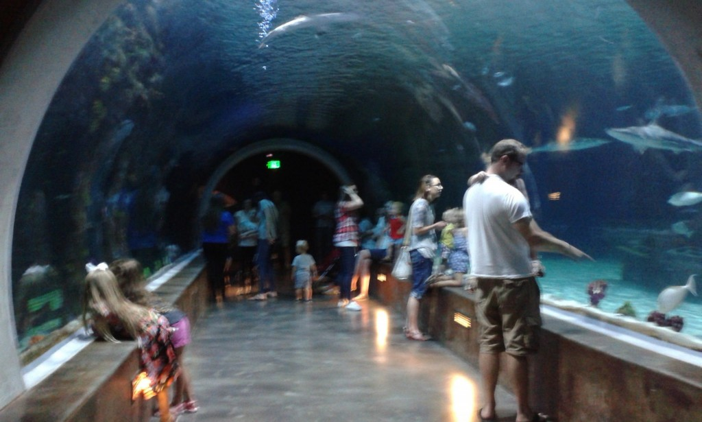 Stoped by the aquarium on the way home, this was an awesome shark tube!