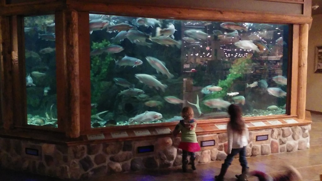 We had a down day so we decided to go to our makeshift idea of an indoor zoo... Cabelas.  The kids loved the fish :)