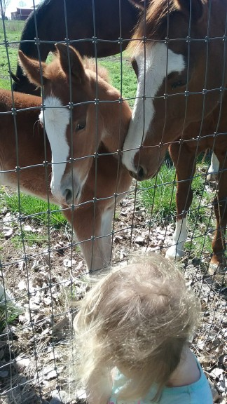 te baby horse she got to play with