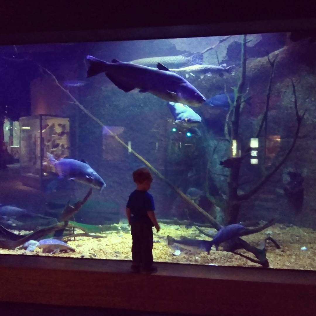 One of MANY awesome aquariums (this one is in Mississippi)