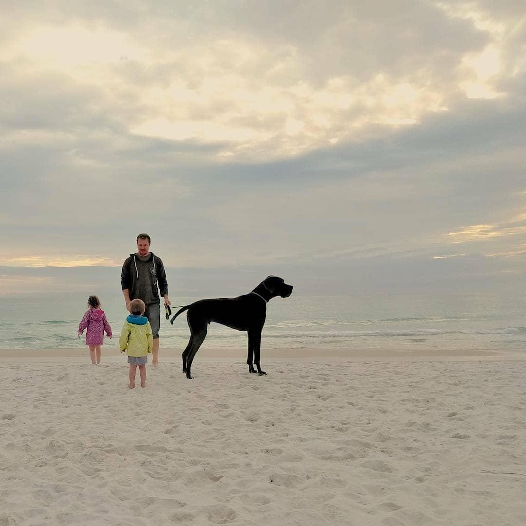Florida dog beach